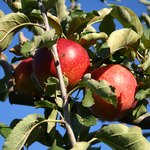 Rent an apple orchard or cornfield for a Harvest Day.