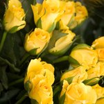 Yellow roses have become a popular symbol of the golden anniversary.