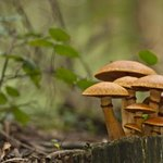 Fungi play an important part in decomposition.