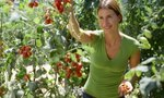 Pinch | Should You Pinch Back Tomato Plants?