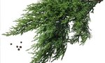 Juniper Bushes | Juniper Bushes & Animals