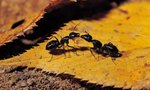 Yard | How to Get Rid of Ants in Your Yard, Naturally