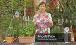 Plastic Fences | Plastic Fences for Growing Vegetables