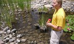 Small Ponds | How to Prevent Mosquitoes at Small Ponds