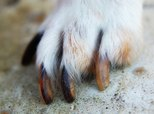 How to Grow an Injured Dog's Nails Long & Strong