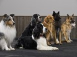 The Best Medium-Size Dogs for First Time Owners