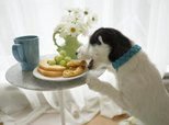 What Can You Do to Encourage a Pup to Eat More?