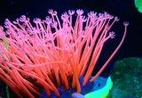 How Do Aquarium Bio Filters Work?
