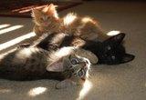 Adopting Feral Born Kittens