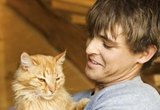 Life Expectancy and Aging Problems of Cats