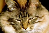 Can Cats Be Allergic to Anesthesia Drugs?