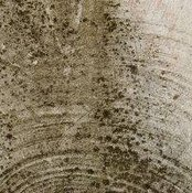 The Dangers of Attic Mold