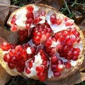 Pomegranate Juice vs. Pomegranate Extract