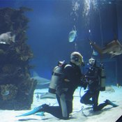 Scuba divers are at risk of developing oxygen toxicity.