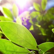 Plants in sunlight.