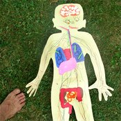 The excretory system is part of the digestive system.