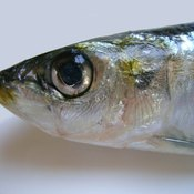 Sardines are a good source of nucleic acids.