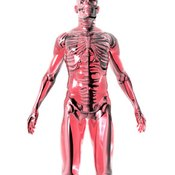 Understanding human anatomy can aid in learning medical terminology.