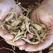 Ginseng Plant Identification