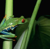 The Pilates frog exercise mimics the movement of a frog leg bending and extending.