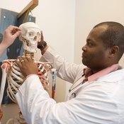 Man studying skeleton