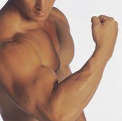 A 1:1 bicep-to-tricep exercise ratio ensures proper arm development.