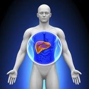 Human liver.