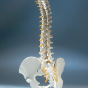 A model demonstrating the normal S-shaped curvature of the spine.