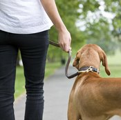 Maintain motivation by walking with a companion.