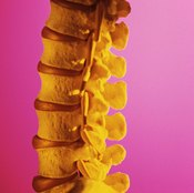 The human spine.