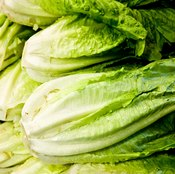 Romaine lettuce is high in vitamins and nutrients.