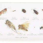 Bottom right is a flea