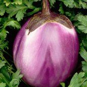 Eggplants contain a wide variety of minerals and vitamins.