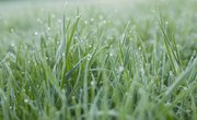 Is Grass a Producer or Consumer?