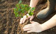 How Can We Actively Restore the Environment?