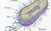 Where Do Bacteria Live?