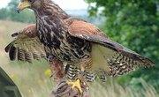 How Do Buzzards Nest?