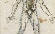 Angiogenesis Vs. Vasculogenesis