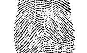 Restriction Enzymes Used in DNA Fingerprinting