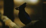 How Do Birds Disperse Seeds?