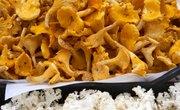 Identification of Wild Mushrooms in Virginia