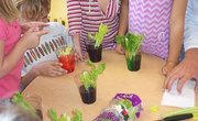 How to Do a Celery Science Experiment