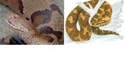 How to Repel Copperhead Water Moccasins