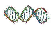 Nucleic Acid Facts