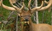 The Best Elk Hunting Regions in Idaho