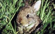 How to Keep Rabbits From Eating Grass