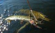 Pike Fishing in Lake George, New York