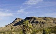 The Desert's Renewable Resources
