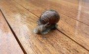 Relationship Between Elodea & Snails