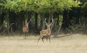Pros and Cons of Deer Hunting